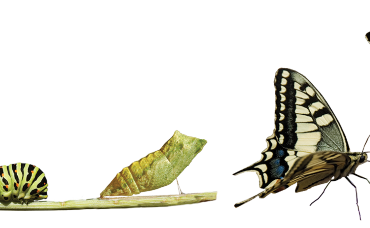 catepillar-butterfly-changing