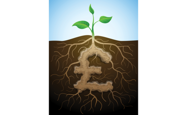 illustration of money plant growing from the soil