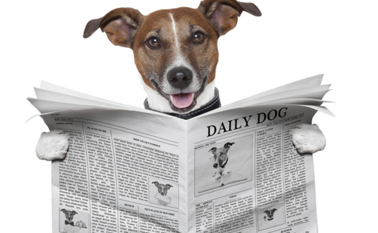 A dog reading the Daily Dog